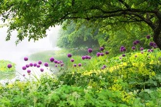 Meditation Walk: The Cycles of Life