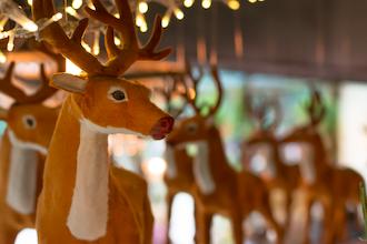Twiggy Reindeer