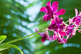 Backstage Pass: The Orchid Show