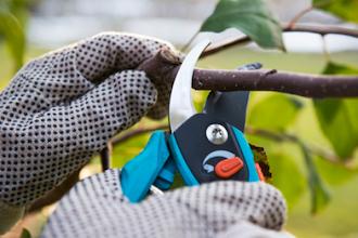 Pruning Principles