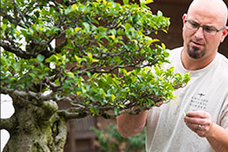 Bring Your Own Bonsai Tree Workshop