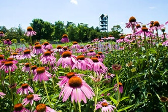 How to Establish and Manage the Best Pollinator Habitat
