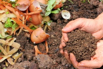 Gardening with Fewer Pesticides