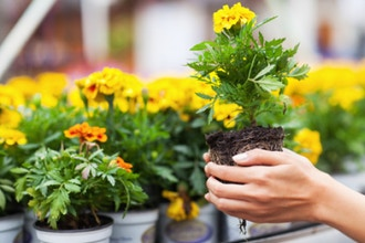 Plant Health 2