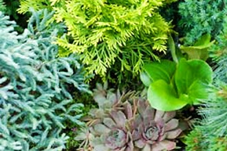 Dwarf Plants for Small Spaces