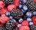 Brambles and Berries for the Beginner