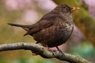 Spring Bird Walk
