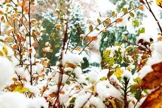 Trees and Shrubs with Winter Interest