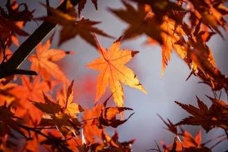 Fall Annuals: Foliage & Flowers
