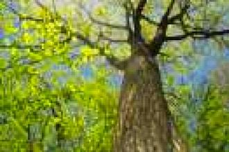 Tree ID at Reed-Turner Woodland