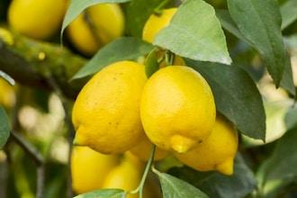 Hands-on Cooking: Preserved Lemons