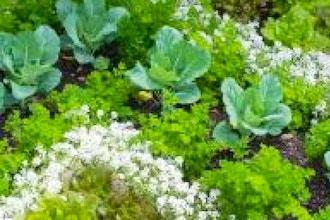 Organic Gardening: A Fresh Approach