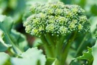 The Organic Vegetable Garden in Spring