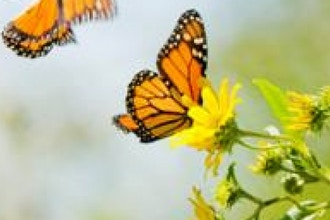 Monarchs in Distress