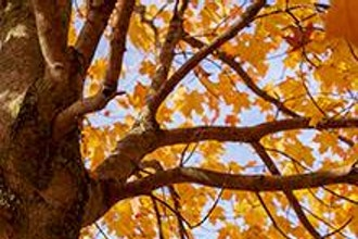 Discover Fall Color at Thatcher Woods