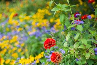Alternative Garden Themes
