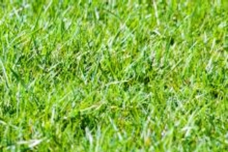 Spring Lawn Care for Homeowners