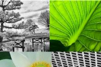 Nature & Landscape Portfolio A (Online)
