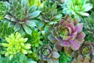 Succulents 101