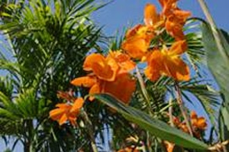 Creating a Tropical Feel in Your Garden