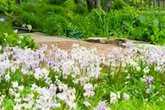 Ephemeral Spring Wildflowers