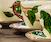 Image Transfer on Ceramics