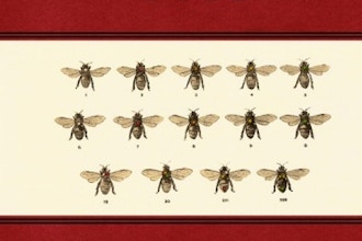 Karl von Frisch and Discovery of the Honeybee Language