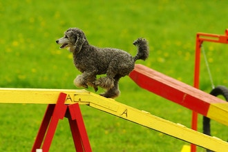 Beginners Agility Class and Rally-O