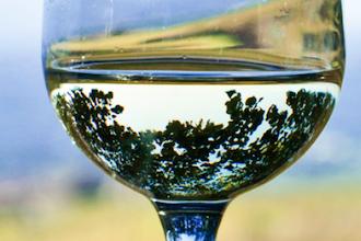 Italian Wine 101: Focus on Friuli-Venezia Giulia