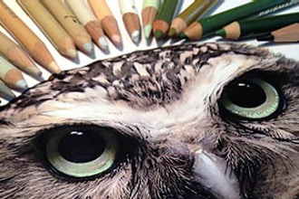 Learn to Draw Realistically: Wildlife (Grades 3-5)