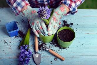 Start Your Own Garden
