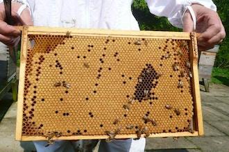 Wild Blossom Beekeeping Class (Online)