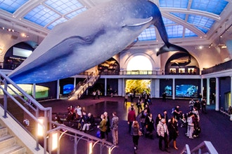 American Museum of Natural History: Un-Highlights Tour