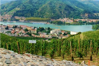 North to South - Wines of the Rhone Valley