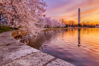 Digital Photography Live In-the-Field: Cherry Blossoms