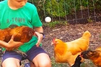 Intro to Backyard Chicken - Keeping