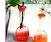 Filled with Fire: Bottle Vessel Vase