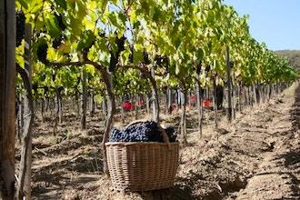 Cellar Talk & Tasting: All About Italian Wine