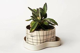 Porcelain Planter Workshop
