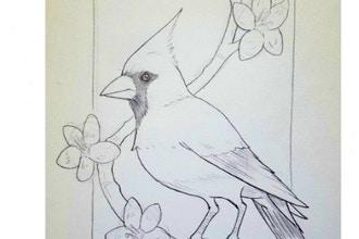Drawing 1: Cardinal