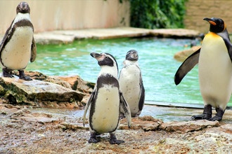 Breakfast with the Penguins (Ages 3-8)