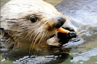 School Break Camp: Aquarium Keeper (Grades 1-5)