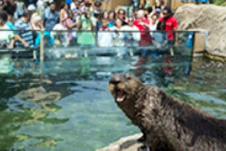 Exploring the Wild: Marine Mammals! (Age 6-10 w/ Adult)
