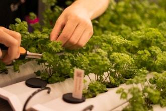 Hydroponics & Indoor Farming