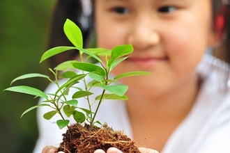 Plant- Based Learning Projects in Classroom