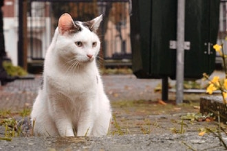 Stray and Feral Cats in NYC: A TNR Workshop