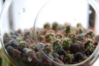 Terrariums: The Desert Landscape