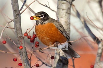 Birding in NYC