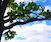 Cloud Study: Prospect Park