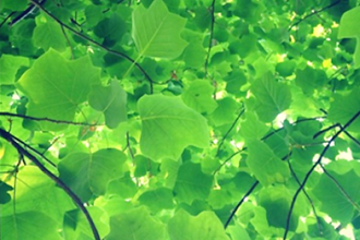 Intermediate Tree Identification